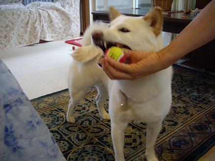 ボール遊び開始!