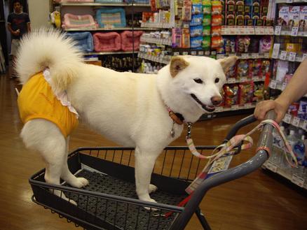 おっ買い物♪おっ買い物♪