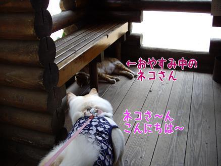 ネコさんにご挨拶