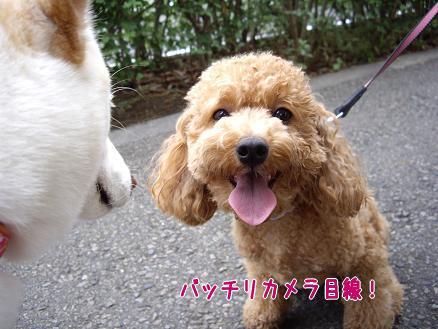 カメラ目線バッチリのバンビちゃん!