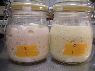 酵母を育ててみよう:元種3日目 002