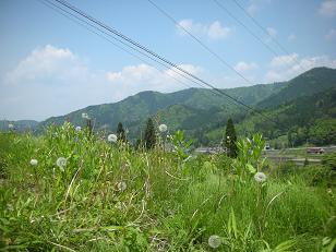 六里山の2008.5 054