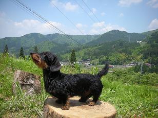 六里山の2008.5 051