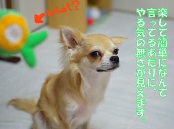 syasin_0705_01_001