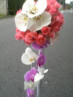 サフィーア&胡蝶蘭