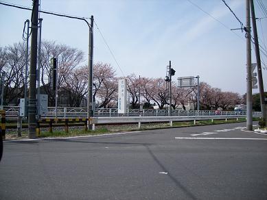日●工●工場桜並木