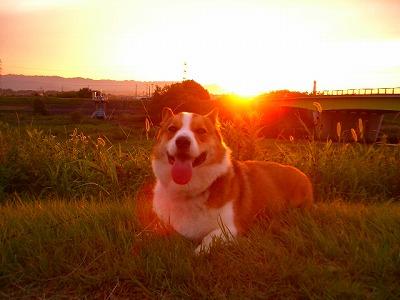 ギンギンギラギラ夕陽が沈む♪
