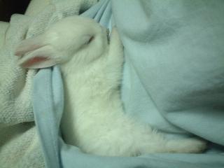 うさぎ睡眠