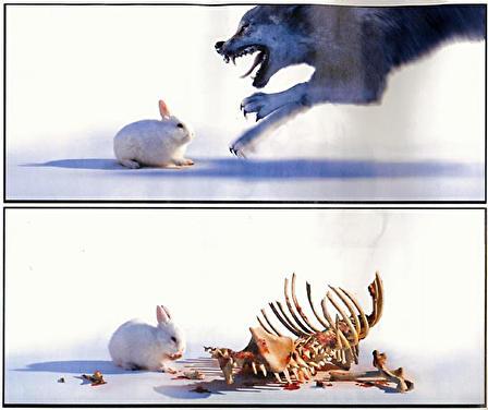肉食ウサギ