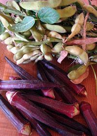 パープルオクラと枝豆