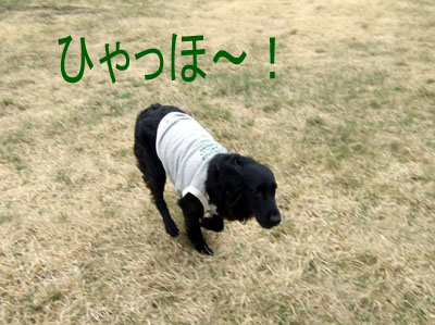 2008_05230043s1.jpg