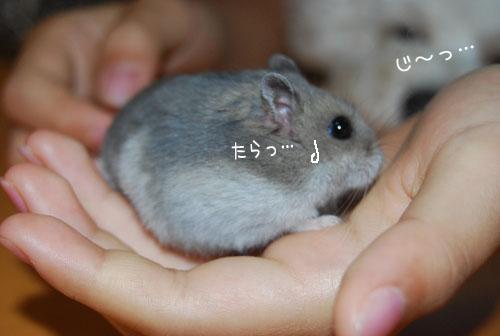 hamu3.jpg
