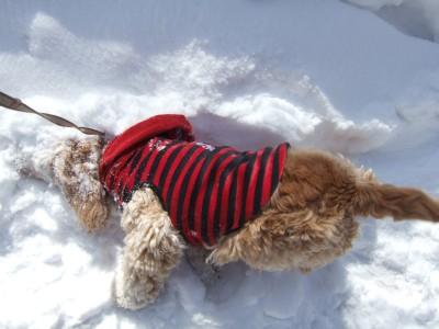 20080301雪あそび1