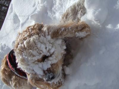 20080301雪あそび3