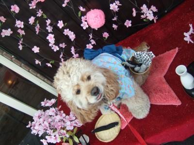 200804朝霧お花見2