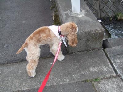 20080510散歩2
