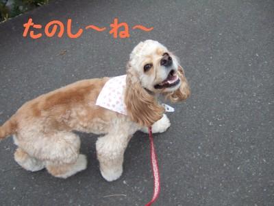 20080510散歩3