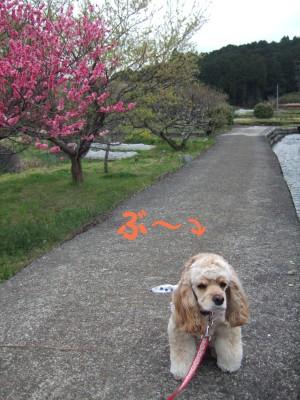 20080510散歩4