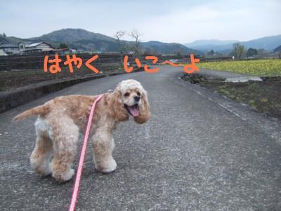 20080510散歩7