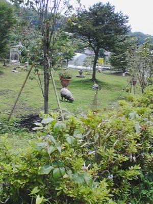 20080705NATUREL羊