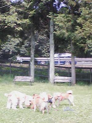 20080705ワンコ会議