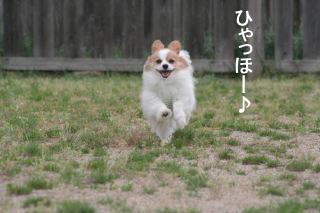 2008GW貴志川 0003
