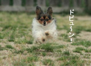 2008GW貴志川 0005