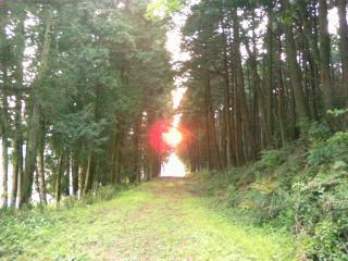 散歩-0115