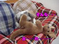 20080514-5.jpg