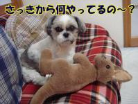 20080514-6.jpg