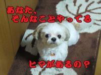 20080802-4.jpg