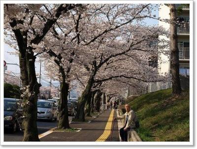 見事な桜♪