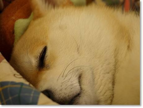 可愛く寝て下さい・・・