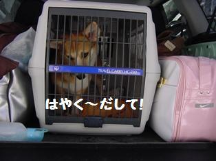 Rin080315-30.jpg
