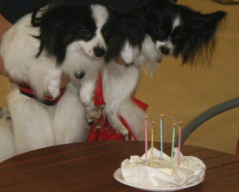 batenten cake
