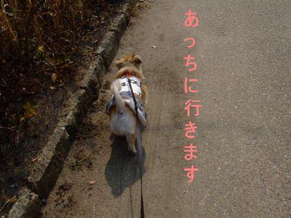 2008_03140021.jpg