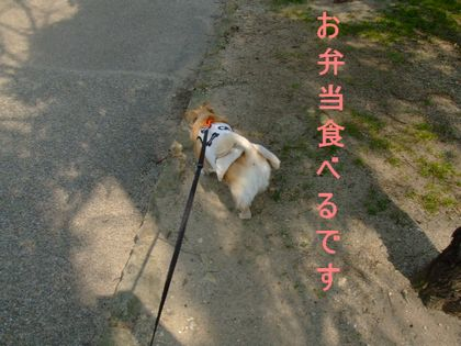2008_03140048.jpg