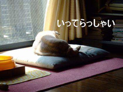 2008_03230004.jpg