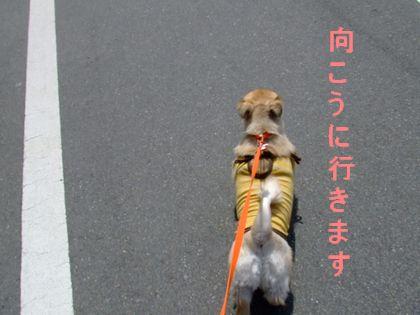2008_03230016.jpg