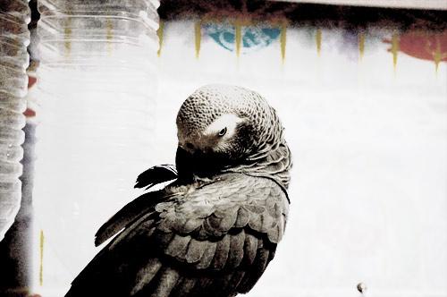 背中の羽根を繕うJean-Luc