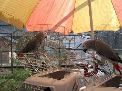 千葉CAKバードランにて2003-8