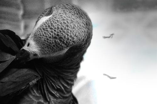 Jean-Lucと浮遊する羽毛
