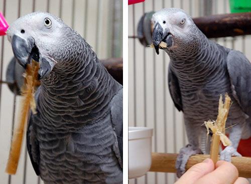サトウキビを食べるJean-Luc