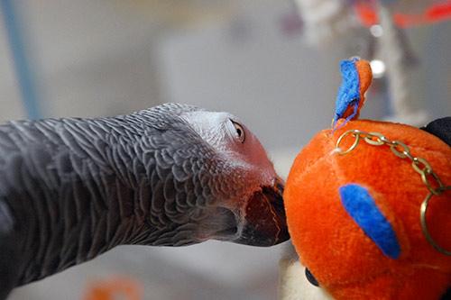 オレンジくまさんとJean-Luc
