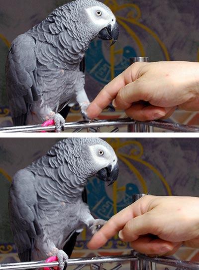 握手するChloe