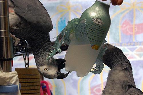 ペットボトルとJean-LucとChloe-1