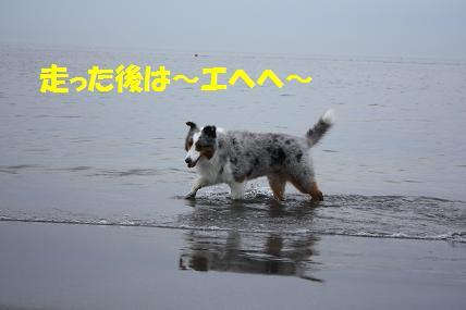 IMG_0781a.jpg