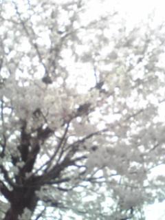 08/3/30 マンション近くの桜