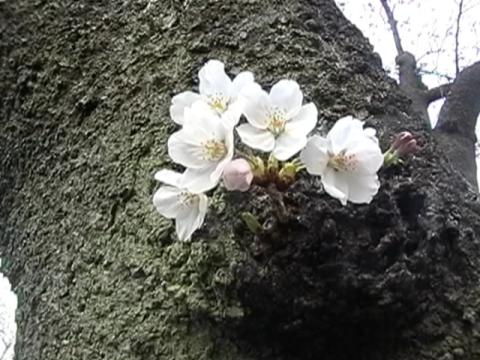 08/3/27 代々木公園