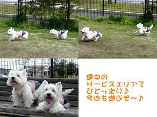 心愛&アンちゃん